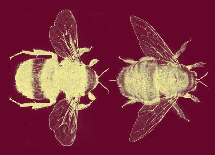 The Beauty Arcana- the superfood beauty benefits of honey
